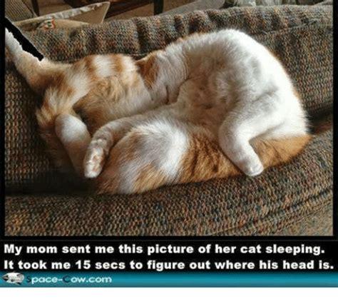 Sleeping Cat Meme - sleeping cat meme pictures to pin on pinterest pinsdaddy