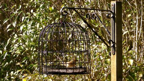 the bird feeder cage anti squirrel and pigeon proof