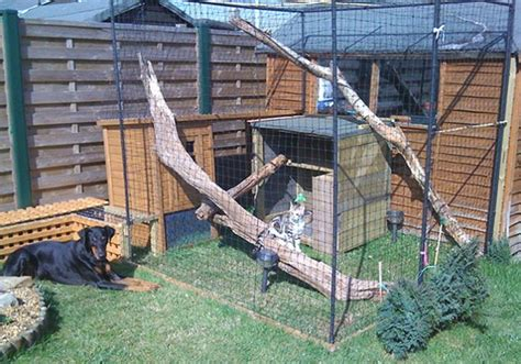 how to keep cats outdoor furniture how to build an outdoor cat run to keep your cat safe