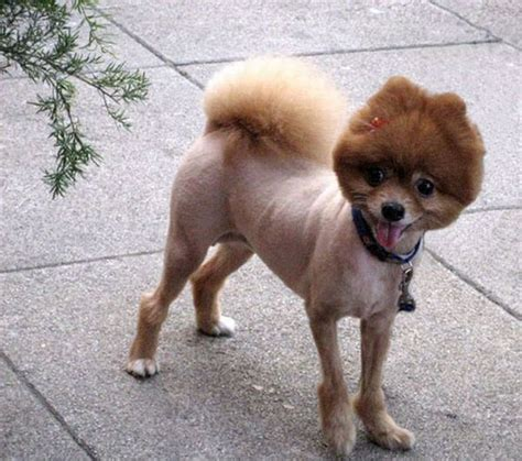worst dogs for really cool pics worst haircuts