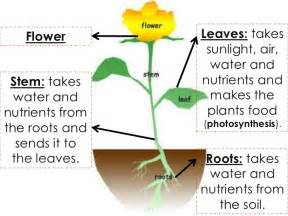 how do plants and animals get energy