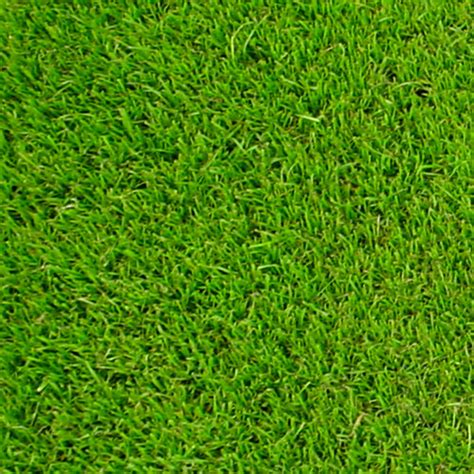 winter green couch wintergreen turfman brisbane supply quality turf