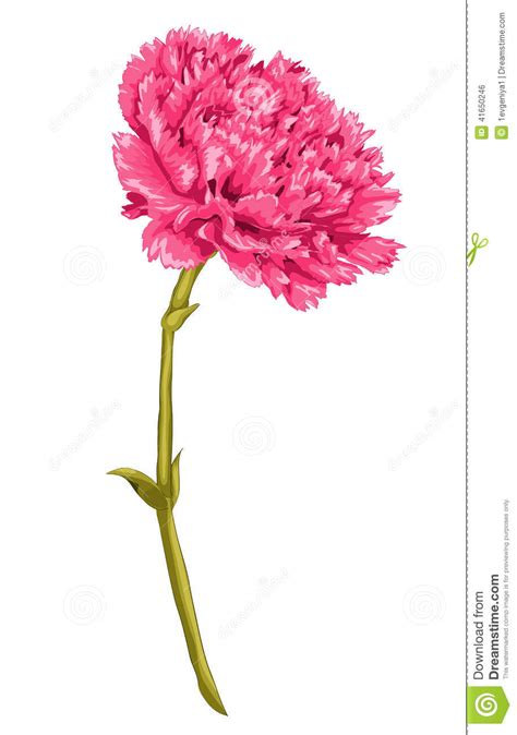 beautiful pink carnation with the effect of a watercolor