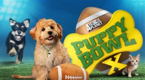 animal planet puppy bowl mvp vote puppy bowl x starting line up fuzzy today