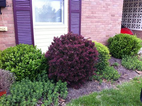 bushes for front of house bushes go big or go home