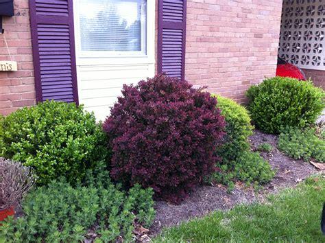 shrubs for front of house trimming shrubs go big or go home