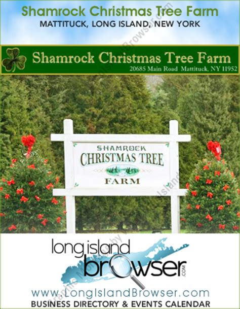shamrock christmas tree farm mattituck cut your own
