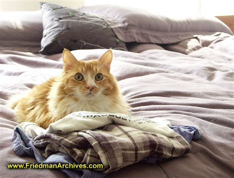 On The Bed by Cat On The Bed