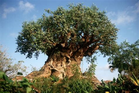 Mountainside Home Plans by Disney S Animal Kingdom Disney Discount Tickets Crowds