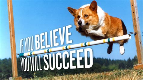 Corgi Meme - corgi meme jumping www pixshark com images galleries