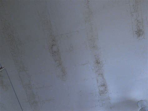 muffa sul soffitto problema muffa soffitto habitissimo