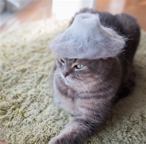 cat hair cats in hats made from their own hair because is