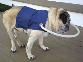 blind dogs animal outfitters blind helper jacket