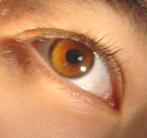 honey eye color honey brown demetrios eye color my book