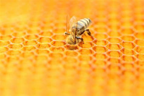 national honey bee day  national awareness days  calendar  uk