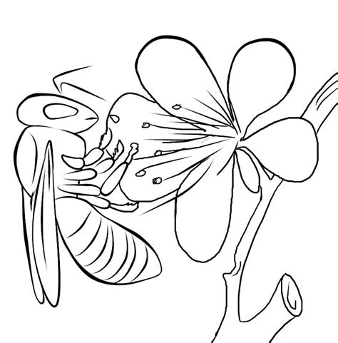 coral coloring page coloring home