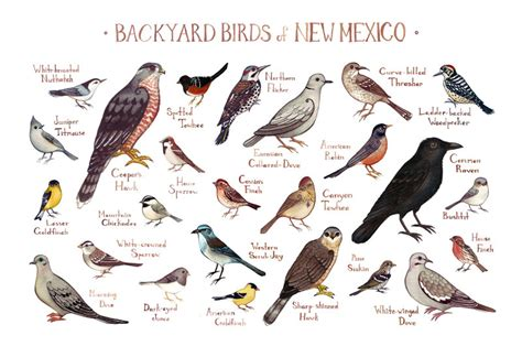 new mexico backyard birds field guide art print watercolor