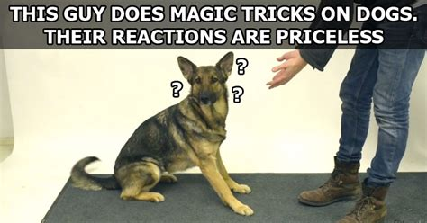 tricks for dogs magic tricks for dogs 171 twistedsifter