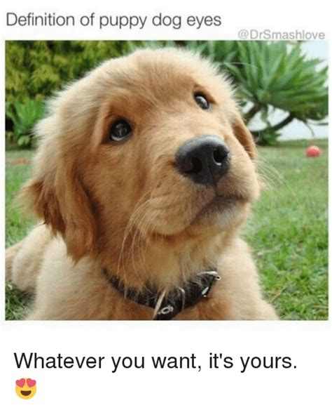 puppy definition 25 best memes about puppy dogs puppy dogs memes