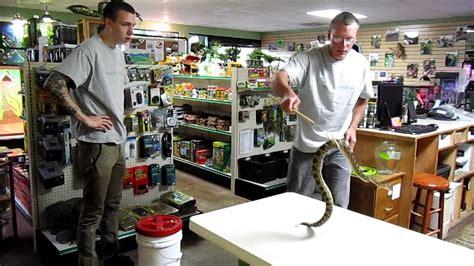 house of reptiles house of reptiles portland oregon area venomous snakes of oregon youtube