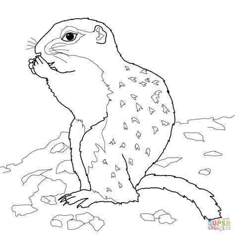 ground squirrel coloring page arctic ground squirrel coloring page free printable