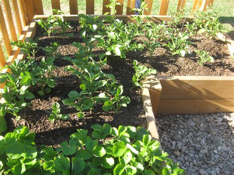 Vegetable Gardening Veggie Garden Ideas On A Budget Vegetable Gardening