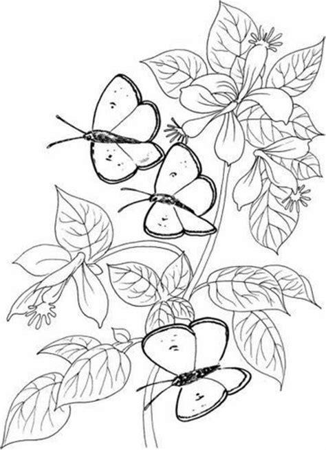 imagenes de mariposas y flores para imprimir dibujos y plantillas para imprimir mariposas y flores