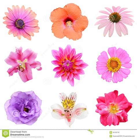 set of flower collection 001 vector illustration