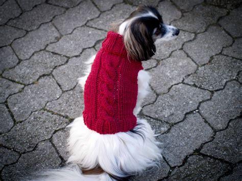 Hundepullover Chihuahua Häkeln by Hundepullover Anleitung Judithhaekelt De