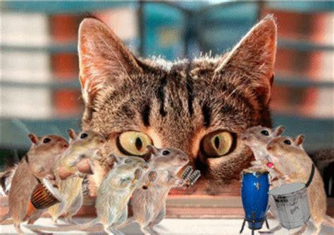 chat haus katzen bilder katzen gb pics gbpicsonline