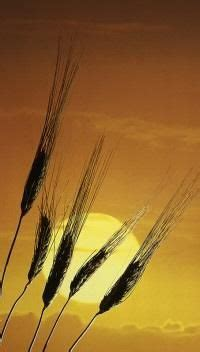 whole grains wic ca pan stonehenge in the morning wicca witchcrafty