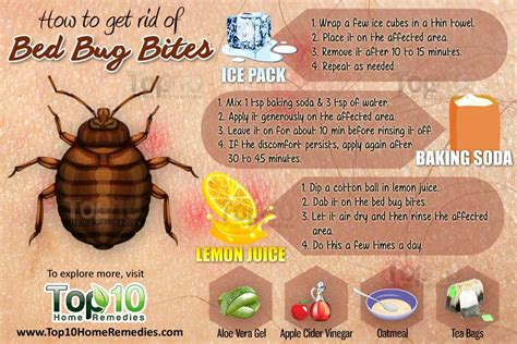 how to eliminate bed bugs how to get rid of bed bug bites top 10 home remedies