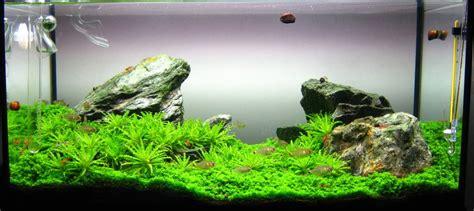 green box design aquascape my first attempt at iwagumi uk aquatic plant society