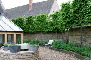 pleached trees instant trees pleached trees hornbeam beech lime london plane