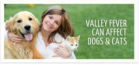 symptoms of valley fever in dogs valley fever get the facts scaryair org pets