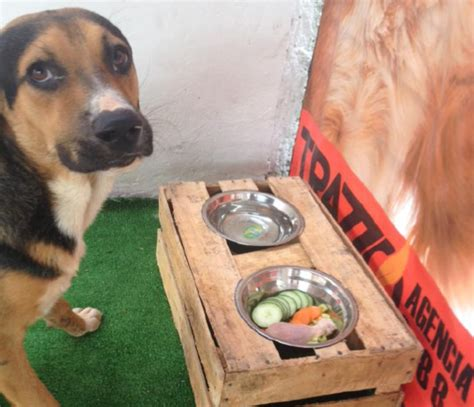 restaurant for dogs restaurant for dogs in southeast mexico opens in merida the yucatan times