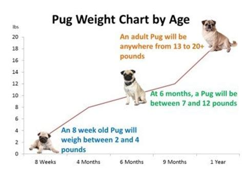 pug weight chart pug age growth chart puppy and