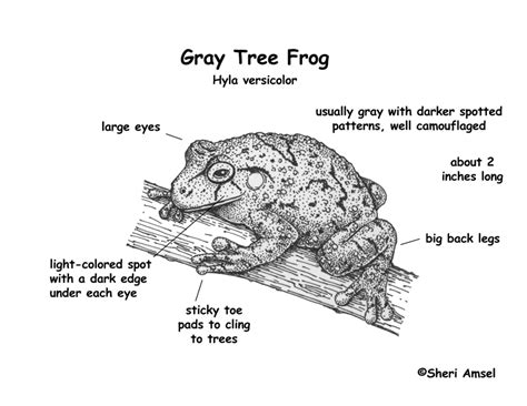 diagrams of frogs labeled tree diagram images