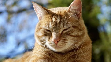 national spoil your day how to spoil your cat on national cat day