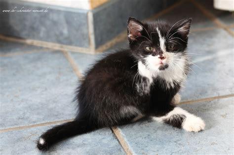 bettdecke snapchat katzenbilder