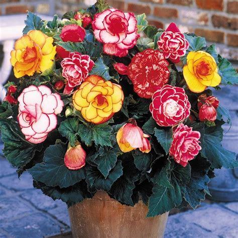 piante da ombra in vaso piante da ombra guida completa per un giardino fiorito