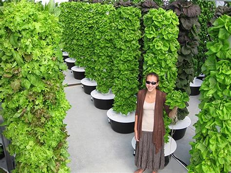 How To Grow A Vertical Vegetable Garden by 20 Vertical Vegetable Garden Ideas Home Design Garden