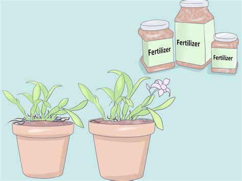 engrais plante d int rieur 4 mani 232 res de entretenir une orchid 233 e d int 233 rieur