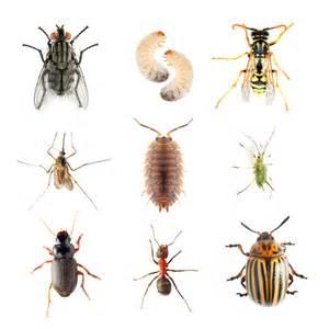 insekten im garten insekten im garten n 252 tzlinge und sch 228 dlinge das