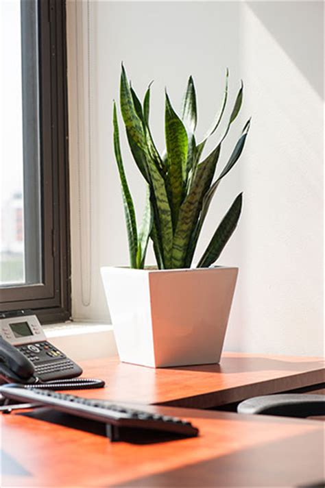 Plant For Office Desk Desk Plants Osborne Plant Service