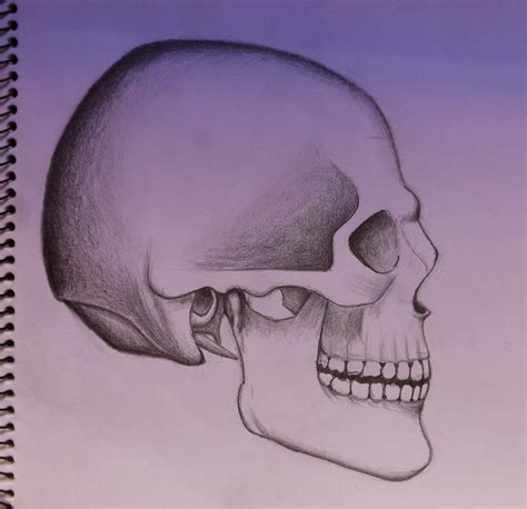sketch side view skull sketch side view by fabioausto on deviantart