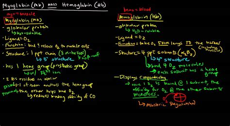 Hemoglobin Also Search For Myoglobin Structure Vs Hemoglobin Www Imgkid The Image Kid Has It