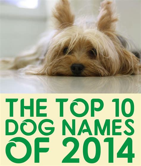 Top 10 Pet Names For Cats by Names Picmia