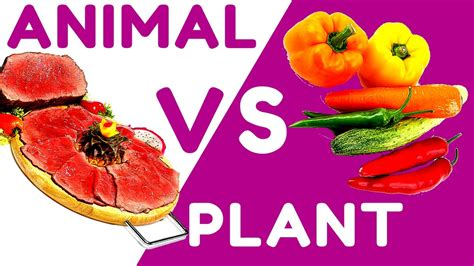r proteins plants remarkable about animal protein vs plant protein