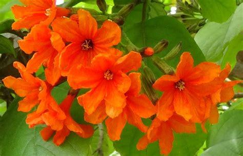 Seprei Motif Orange Blossom 2 names of orange flowers flowers ideas for review